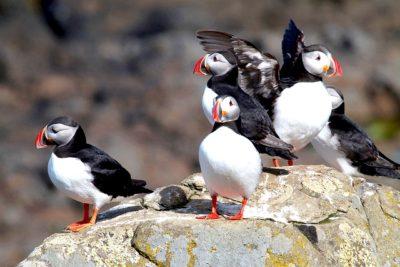 Les 7 îles - Activité authentique et originale Bretagne