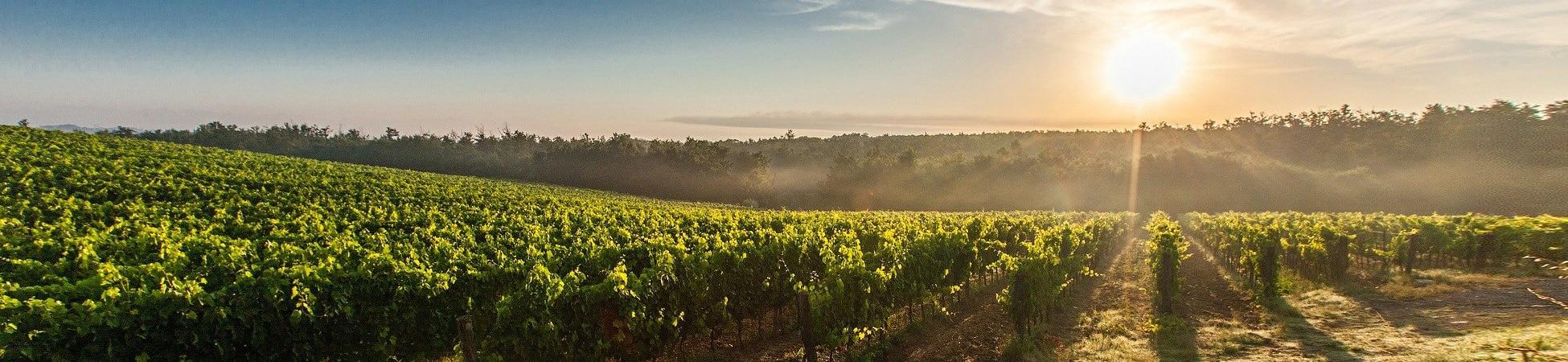 Les plus belles regions viticoles de france