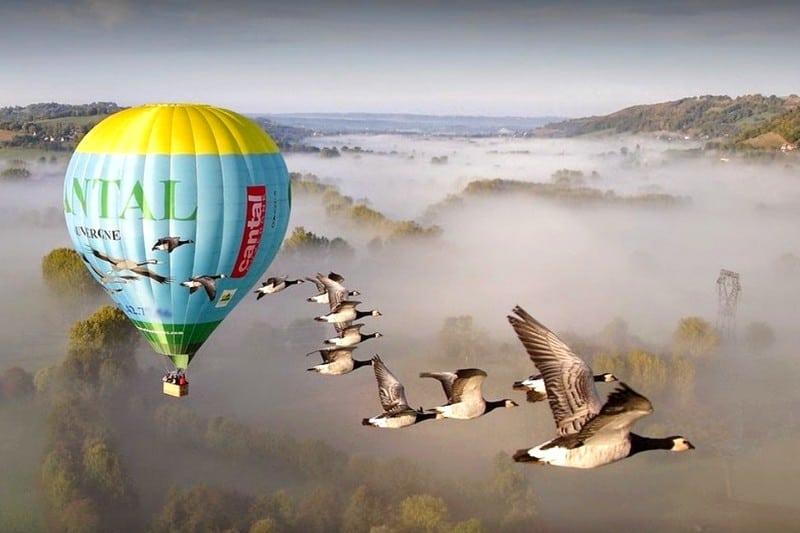 Vol avec les oiseaux montgolfiere Saint Flour Cantal France