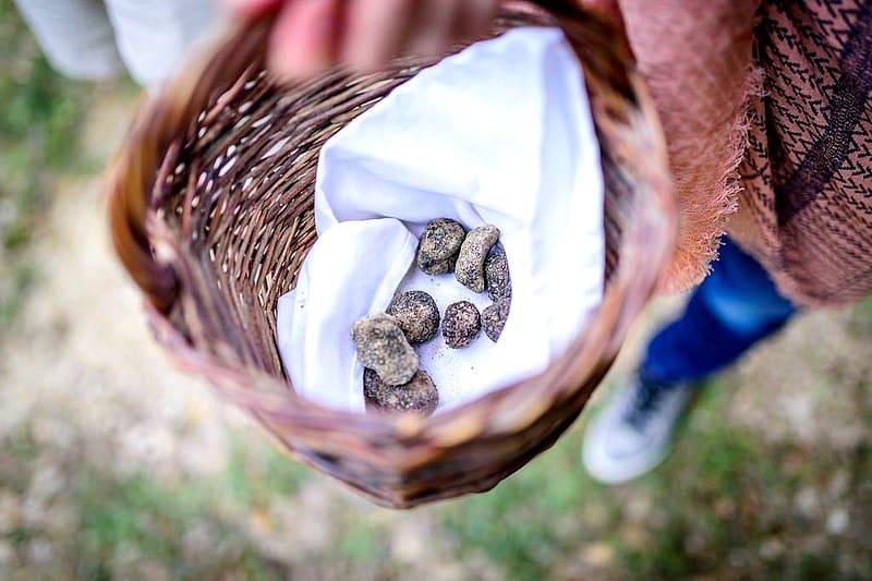 Chasse aux truffes - activites originales gastronomie france provence luberon aix - les pastras