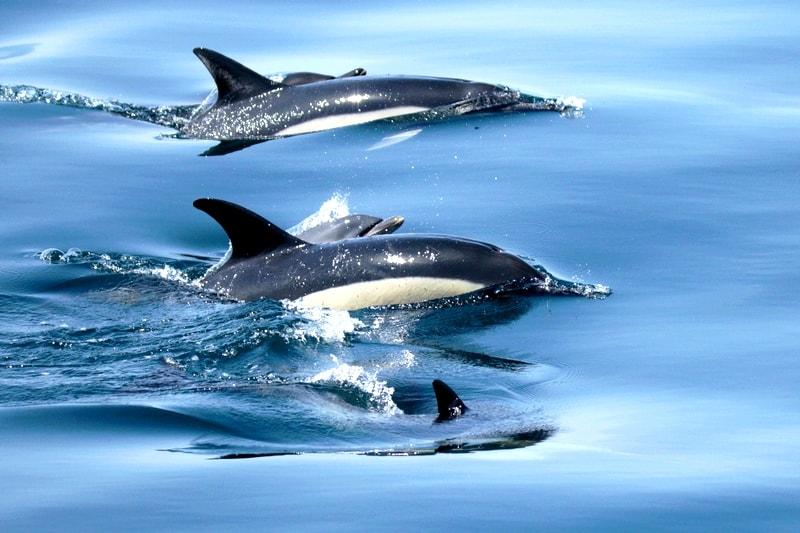 croisiere golfe morbihan observation dauphins oiseaux faune