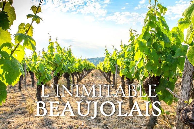 Tidden - visite guidee excursion oenologique vin beaujolais aoc vignobles guide chauffeur