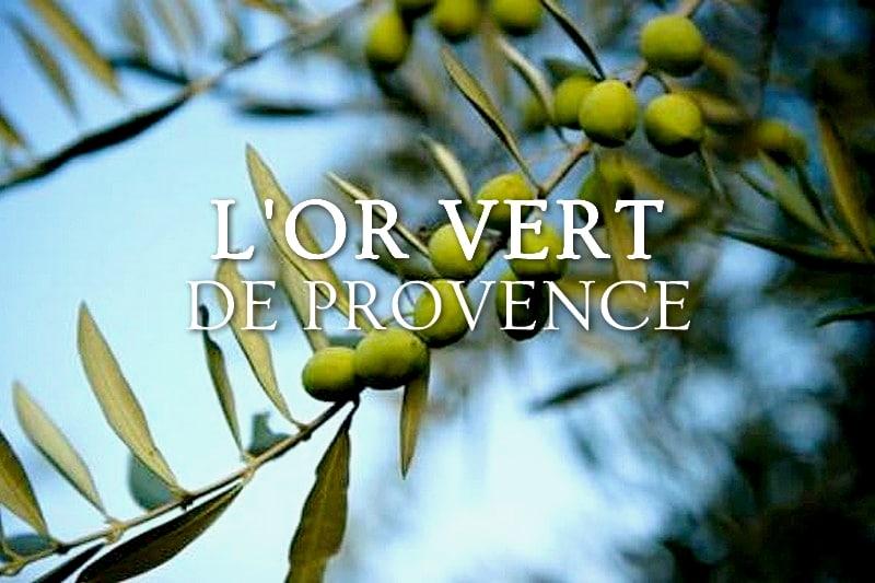 Tidden - huile olive experience visite et ramassage