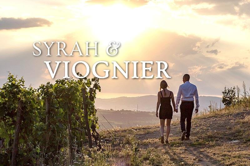 Tidden - visite oenologique vallee du rhone syrah et viognier